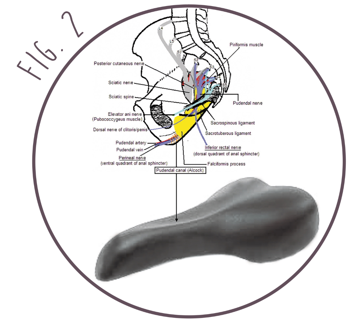Traditional bicycle saddle - cyclist and cycling - sciatic nerve and perineal nerve - pudendal nerve and alcock canal